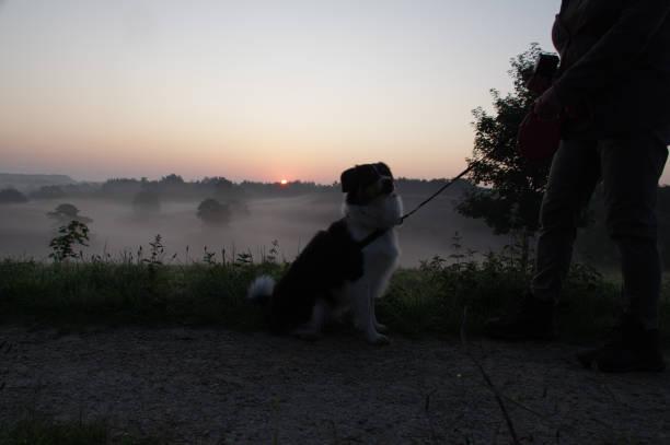 Dog on misty heath sunrise picture id1170111405?b=1&k=6&m=1170111405&s=612x612&w=0&h=sx9p uvktiawdlzu9dxwntggf5jj9ymfyg4f1d qwvw=