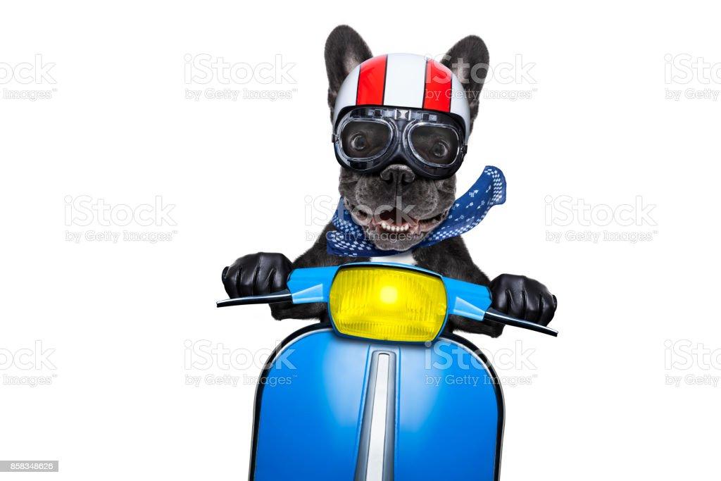Hund auf dem Motorrad – Foto