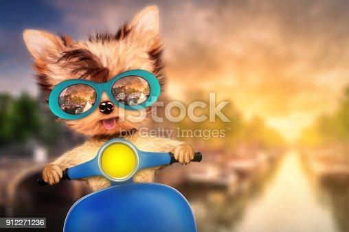 istock Dog on motorbike with travel background 912271236