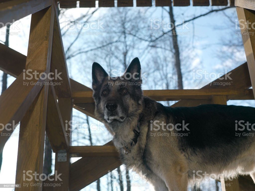 Dog On Porch stock photo