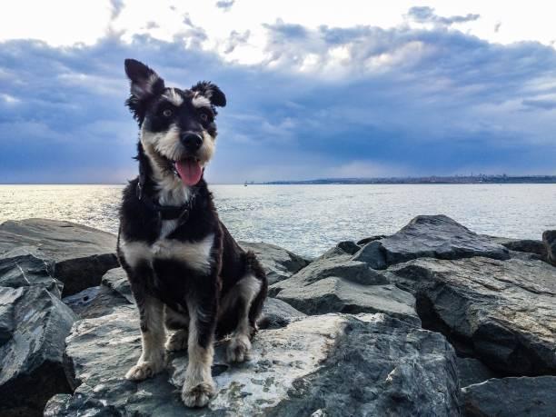 Dog on rock – zdjęcie