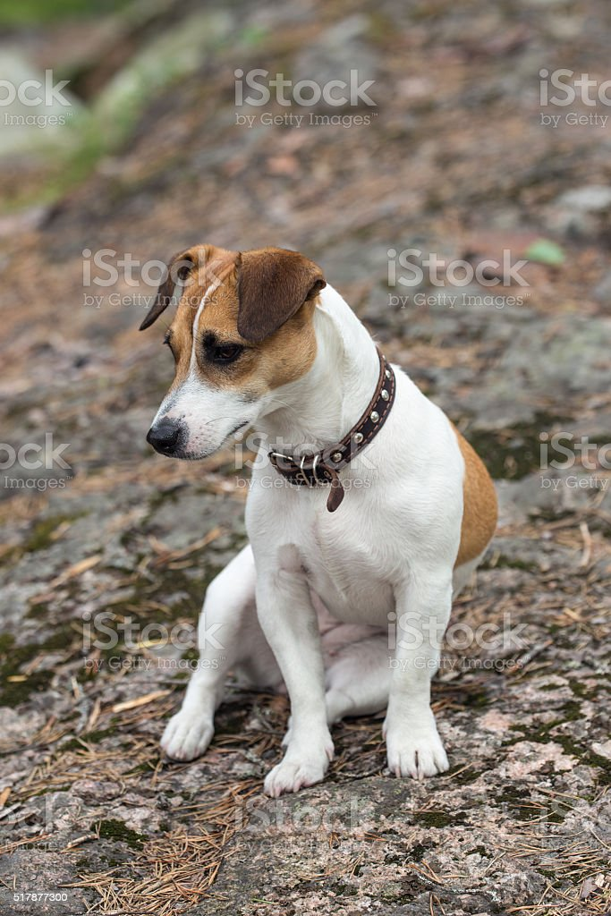 Dog On Rock Stock Photo - Download Image Now