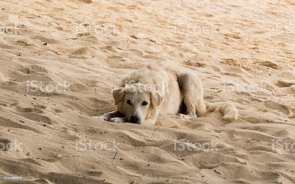 Hund auf sand – Foto