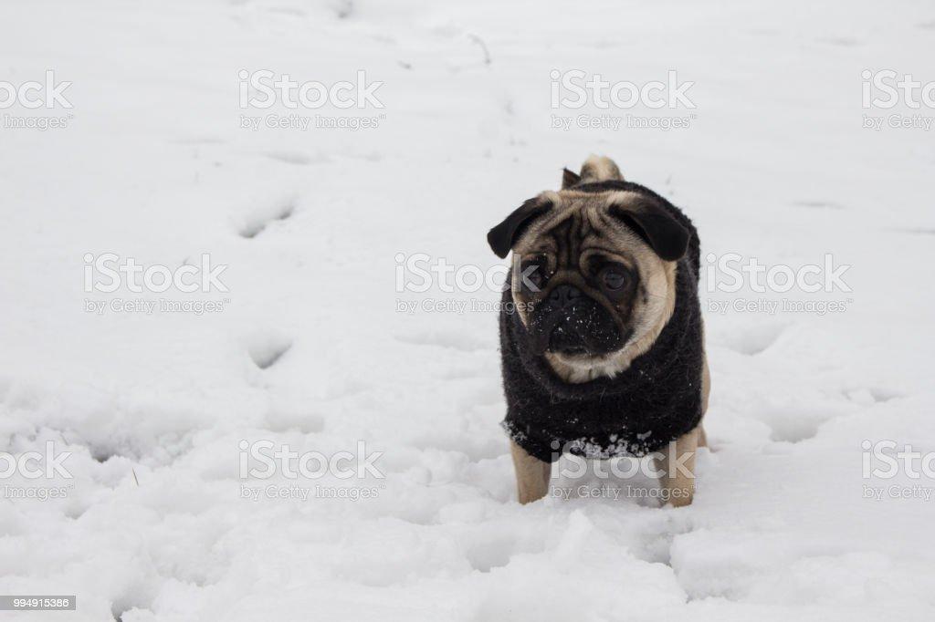 Dog on snow stock photo