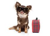 dog on summer vacation