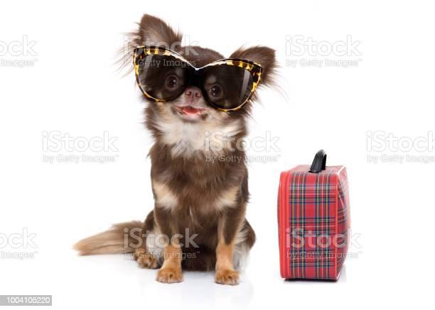 Dog on summer vacation picture id1004105220?b=1&k=6&m=1004105220&s=612x612&h=ji8yb3kjvag jtn u0rfplldpjzuutksttl bhbsre8=