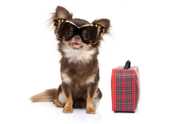 dog on summer vacation stock photo