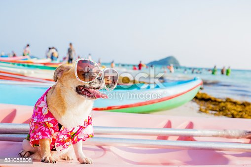 istock Dog on the beach 531058808