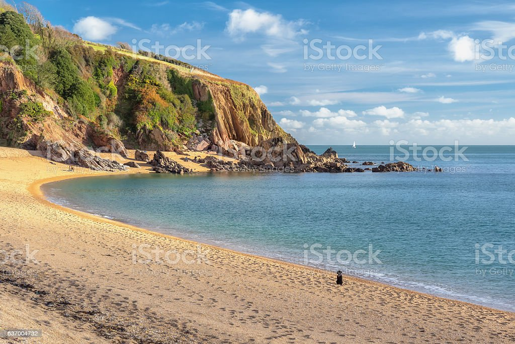 Dog on the beach. stock photo
