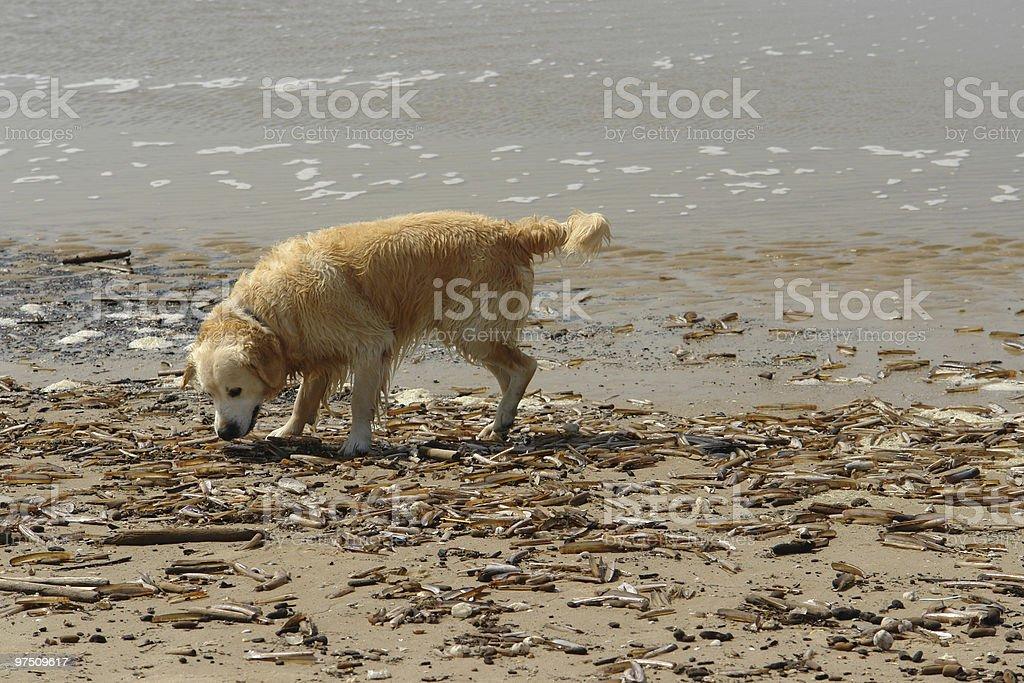 Dog on the beach. royalty-free stock photo