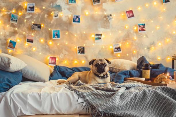 yatakta köpek yatak odası hiçbir insan dekore - k logo stok fotoğraflar ve resimler