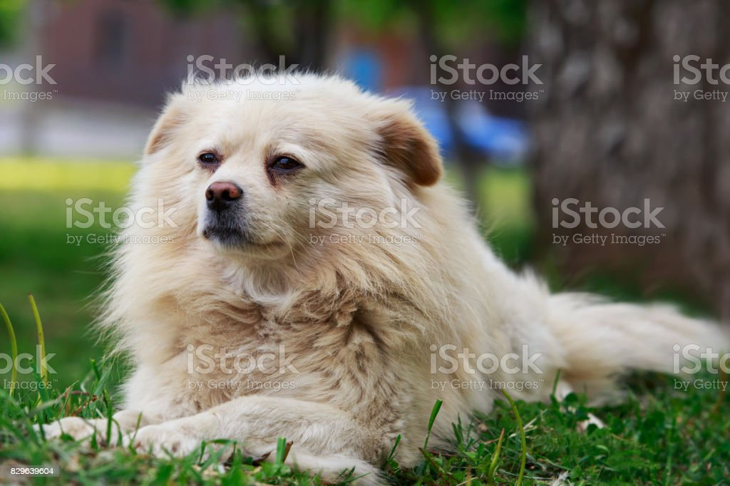 Dog on the grass stock photo
