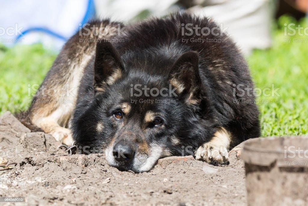 hond op het gras - Royalty-free Bont Stockfoto