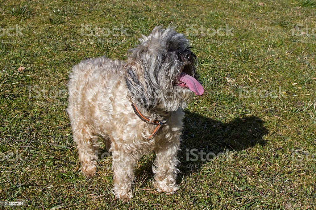 dog on the meadow stock photo