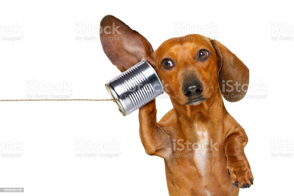 dog on the phone listening carefully stock photo