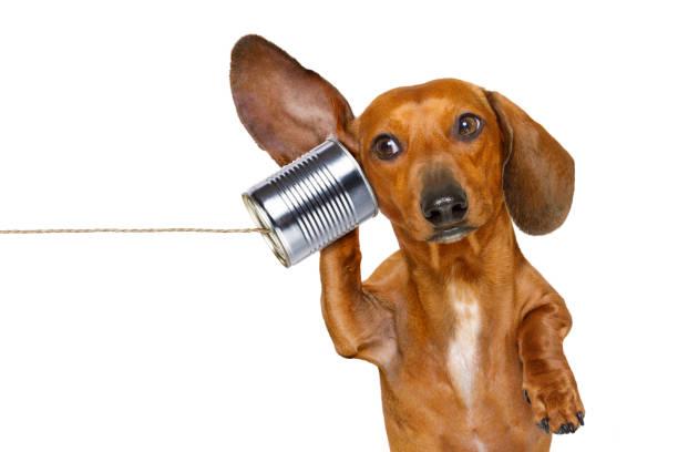 dog on the phone listening carefully stock photo