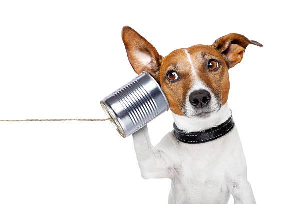 dog on the phone stock photo