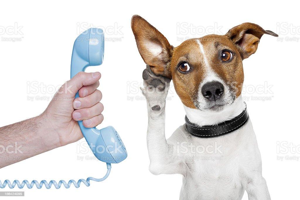 dog on the phone royalty-free stock photo