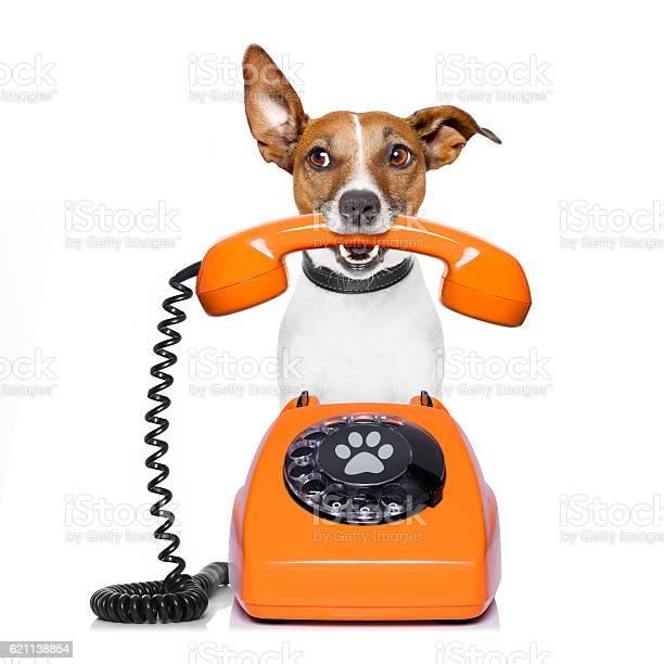 Dog on the phone picture id621138854?b=1&k=6&m=621138854&s=612x612&h=vp xuonmyrb055tzfo5xhawob6ohpe00gpuqdwvefue=