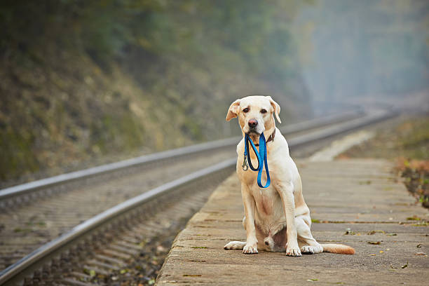 dog on the railway platform - lost stock photos and pictures