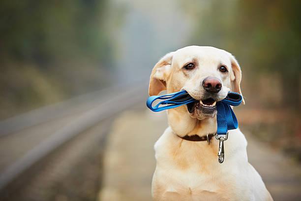 Dog on the railway platform stock photo