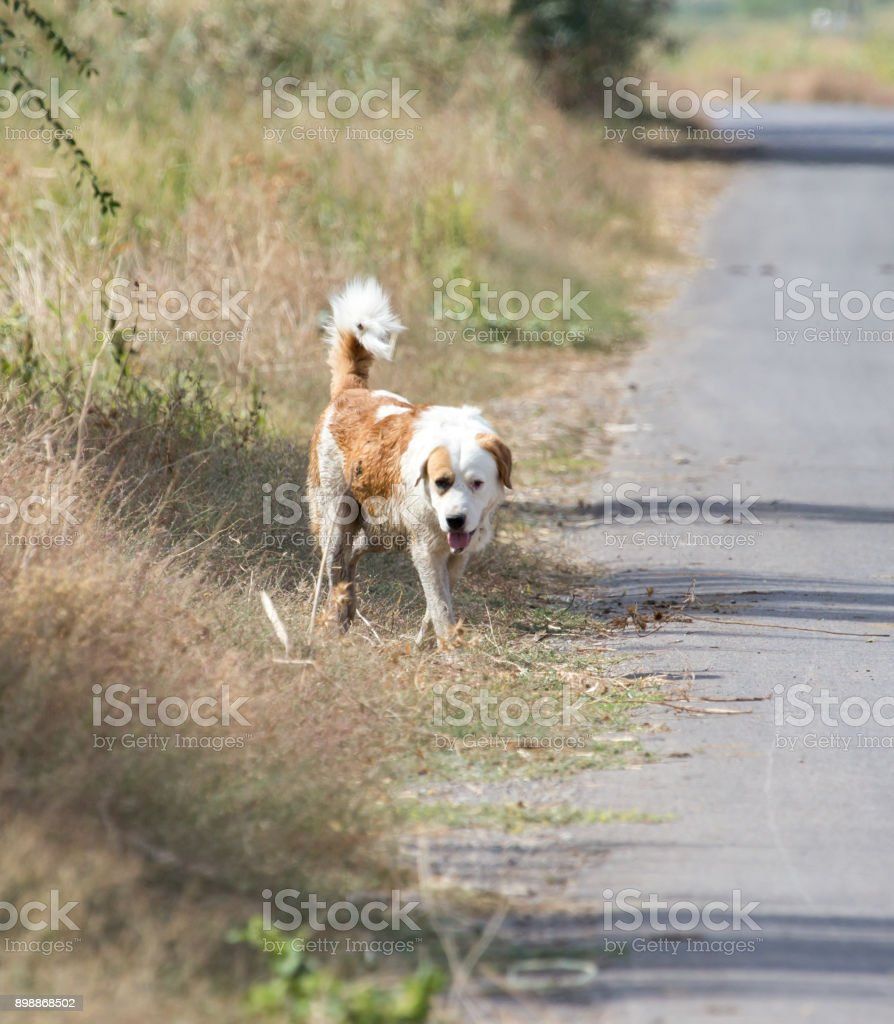 Dog on the road in nature stock photo