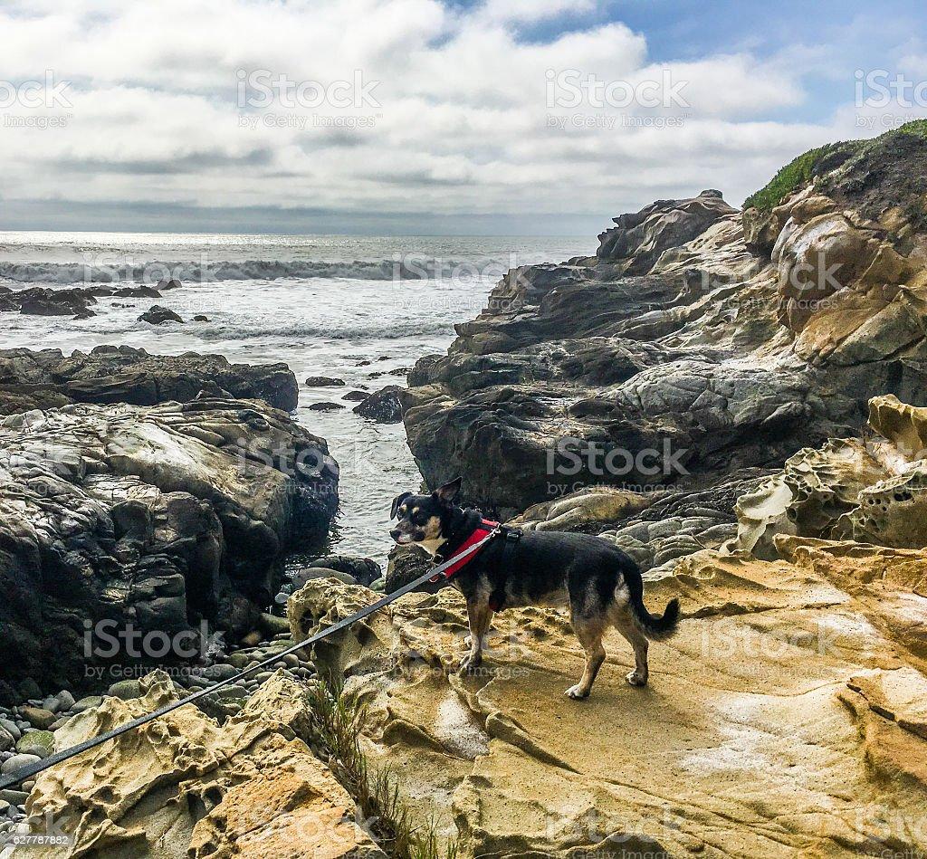 Dog on the rock stock photo