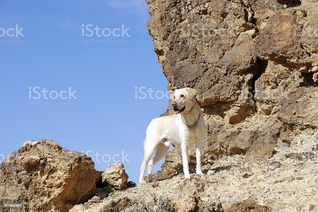 Dog on the rock royalty-free stock photo