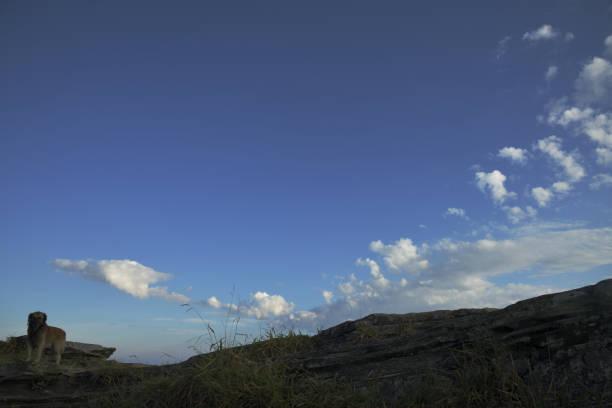 Cão nas rochas com céu azul e as nuvens brancas em Brasil - foto de acervo