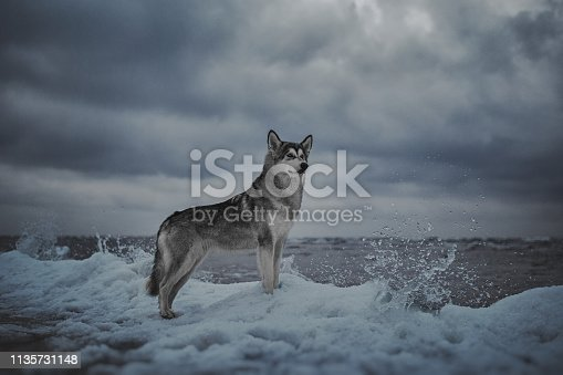 Dog on the shore of the winter sea