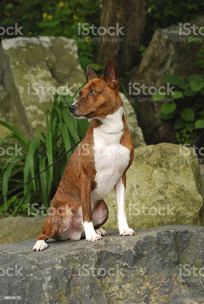 Dog on the stone royalty-free stock photo