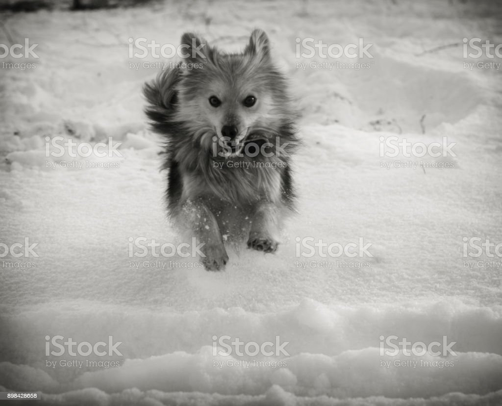 dog on the street in winter in cold weather. portrait of a pet on a beautiful background. New Year's Christmas motive. stock photo stock photo