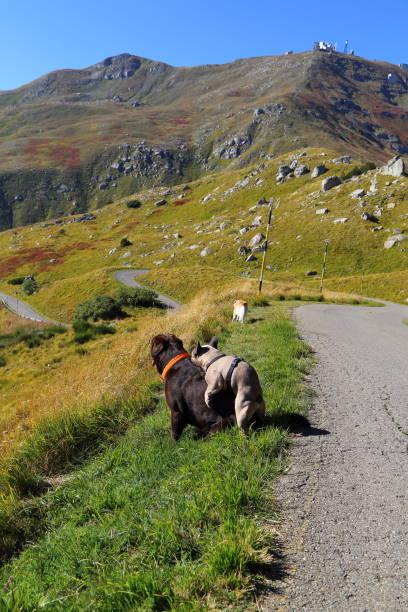 hund auf dem gipfel des berges - hundeplätze stock-fotos und bilder