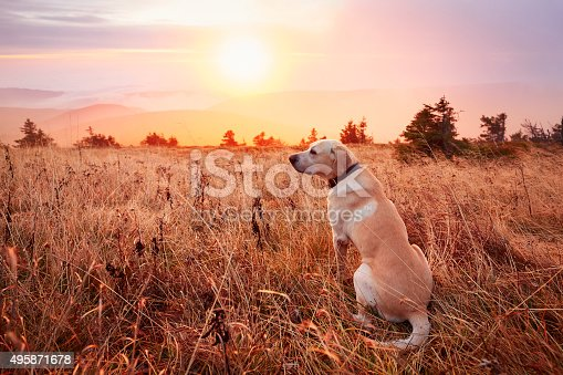 istock Dog on the trip in mountains 495871678