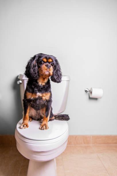 Dog on toilet. Portrait orientation. stock photo