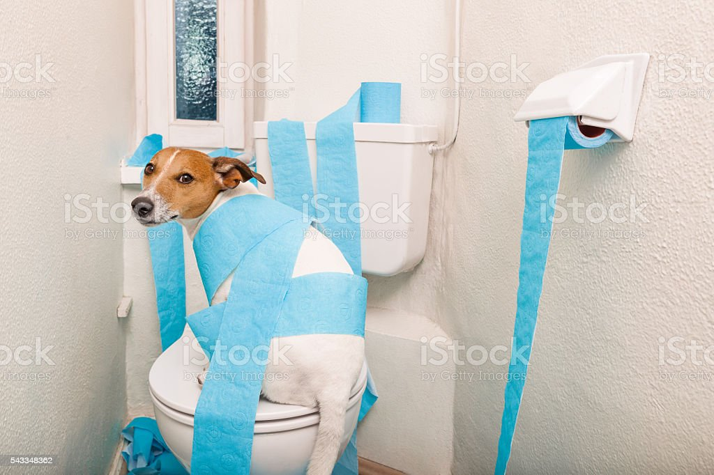 dog on toilet seat and paper rolls stock photo