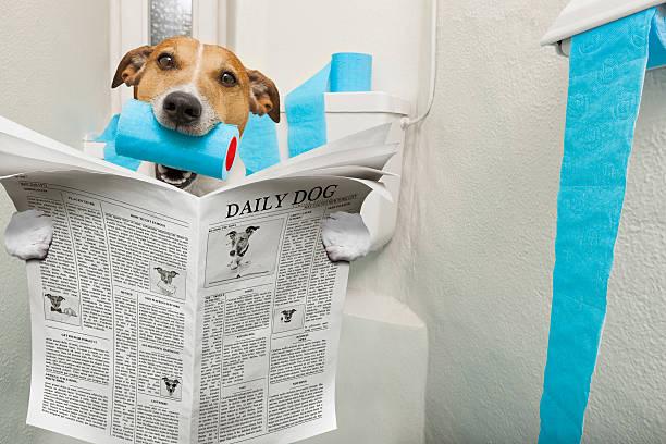 hund auf toilettensitz - durchfall beim hund stock-fotos und bilder