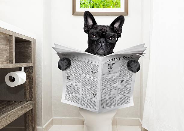 dog on toilet seat reading newspaper - zeichen lesen stock-fotos und bilder