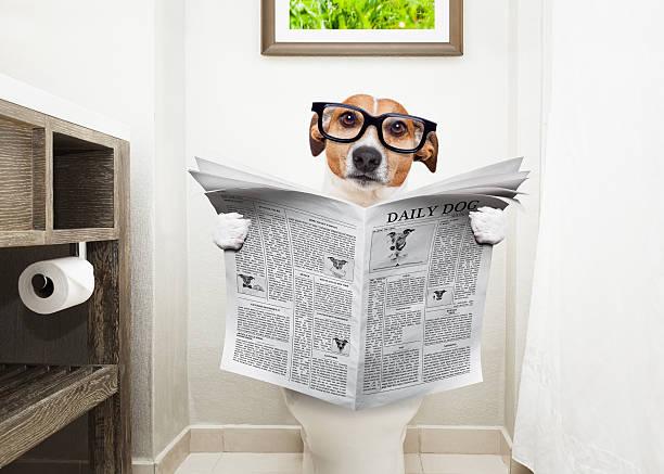 dog on toilet seat reading newspaper - durchfall beim hund stock-fotos und bilder