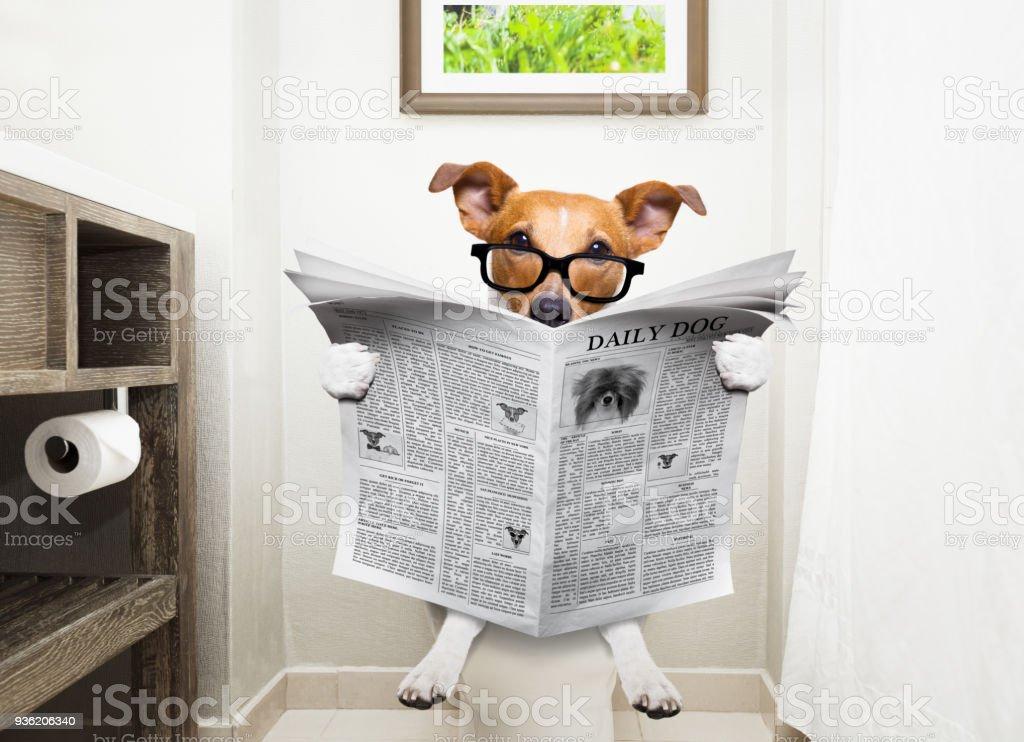 Hund auf Toilettensitz lesen Zeitung – Foto
