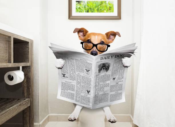 hund auf toilettensitz lesen zeitung - durchfall beim hund stock-fotos und bilder