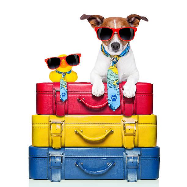 chien sur les vacances - valise humour photos et images de collection