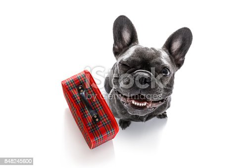 istock dog on vacation with luggage 848245600