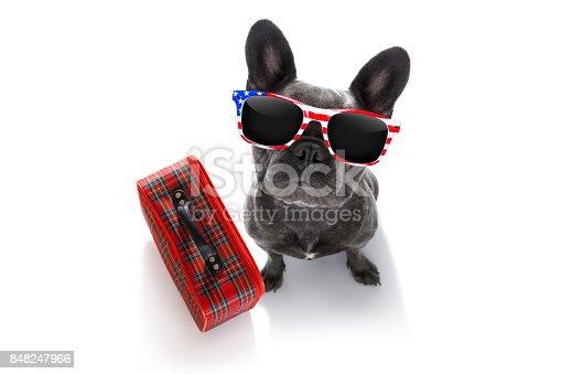 istock dog on vacation with luggage 848247966