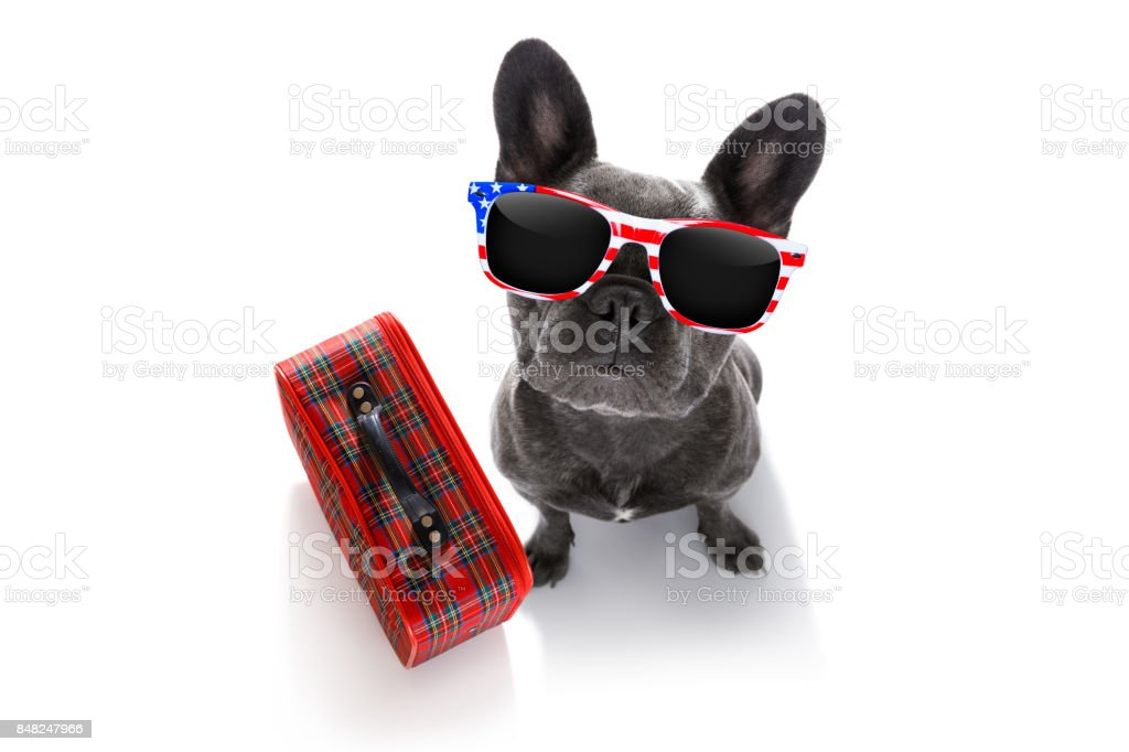 dog on vacation with luggage stock photo
