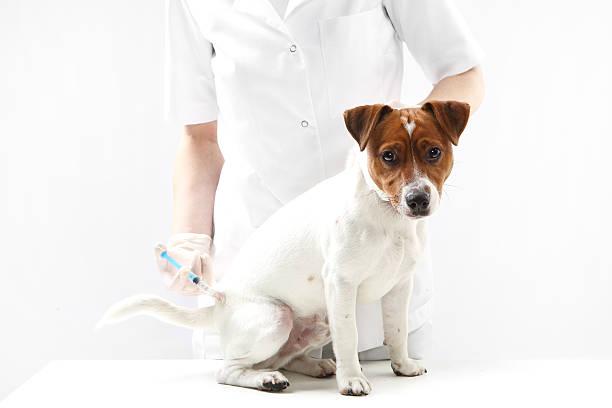 Hund auf Impfung Tierarzt – Foto
