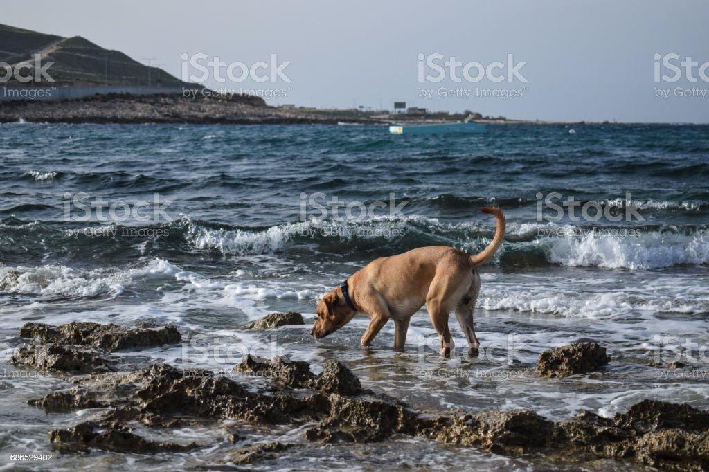 Dog on water's edge zbiór zdjęć royalty-free