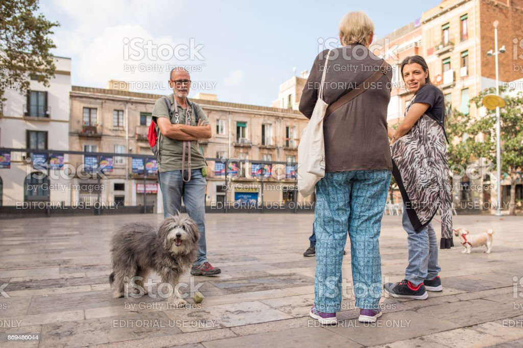 A dog out for a walk in Gracia, Barcelona stock photo