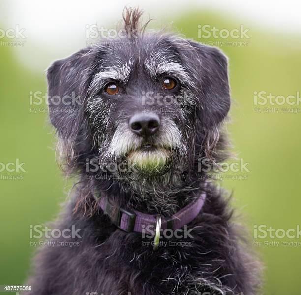 Dog outdoors in nature picture id487576086?b=1&k=6&m=487576086&s=612x612&h=wsmkitn157ocq5q2nkixwp1nqo7ekbcc8uf5i0di248=