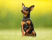 屋外の自然の犬